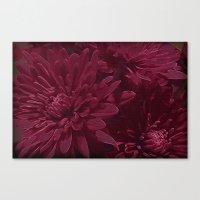 burgundy Canvas Prints featuring Burgundy Chrysanthemums by Judy Palkimas