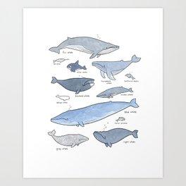 Whales Dolphins & Porpoises Art Print