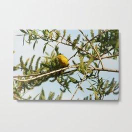 Yellow Warbler on a Branch Metal Print