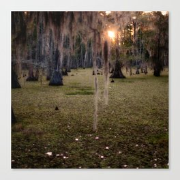 Witch's Hair at Sunrise on the Swamp Canvas Print