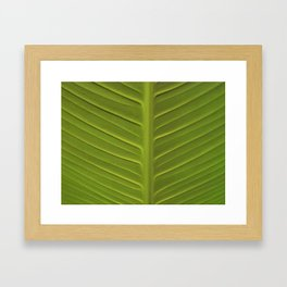 Leaf 3 Framed Art Print