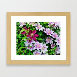 Nelly Moser and Jackmanii Framed Art Print