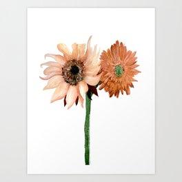 Sunflower IV Art Print