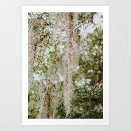 Spanish Moss Art Print