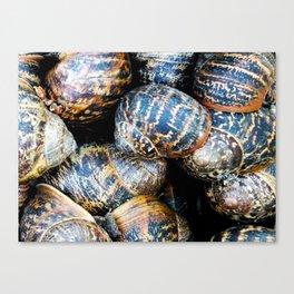 Snail Sleepover ! Canvas Print