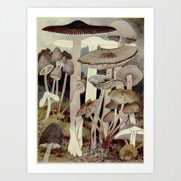 Vintage Mushroom Diagram Art Print