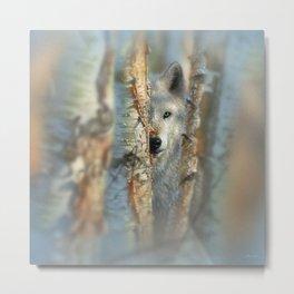 White Wolf - Focused Metal Print