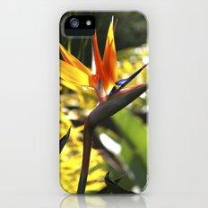 Bird of Paradise II iPhone (5, 5s) Slim Case