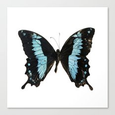 Butterfly #4 Canvas Print