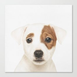 Jack Russell Puppy Canvas Print