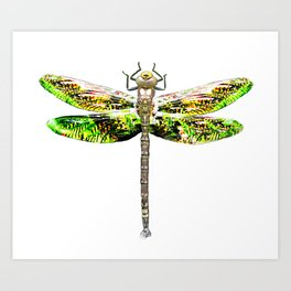 Dragonfly illustrated flying insect Art Print