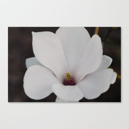 Magnolia Portrait Canvas Print
