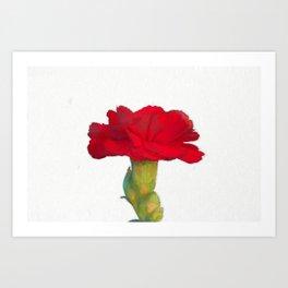 red carnation in bloom in spring Art Print