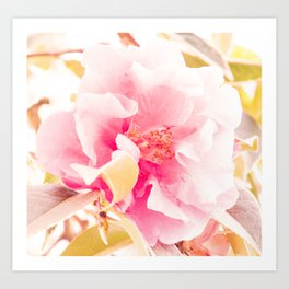 camellia I Art Print
