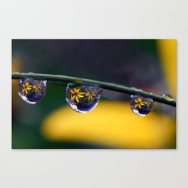 tripple yellow petals Canvas Print