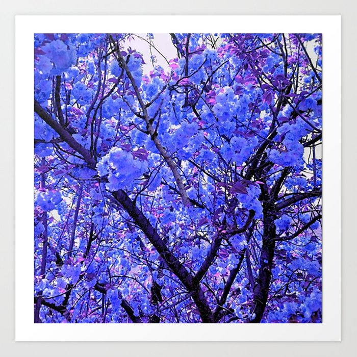 Dogwood Blue Tone Kunstdrucke