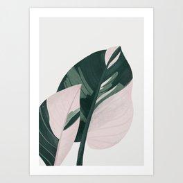Philodendron Plant Art Print