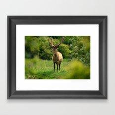 Stag 1/3 Framed Art Print