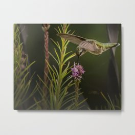Hummingbird and deck flowers Metal Print