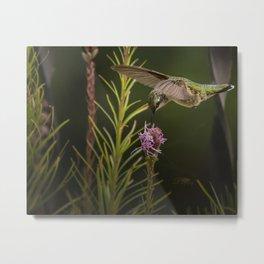 Hummingbird and deck flowers Metal Print