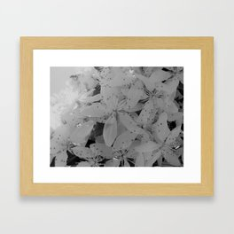 Black and White Blossoms Framed Art Print