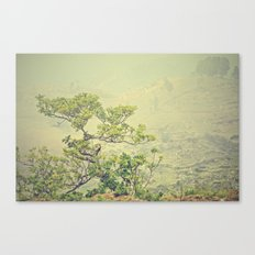 Caribbean Bonsai Canvas Print