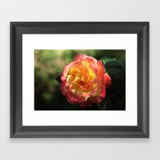 Rose 2599 Framed Art Print