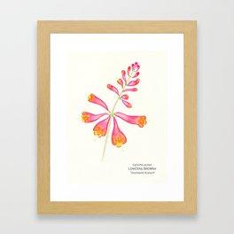 Botanical Sketches 1: Trumpet Honeysuckle Framed Art Print