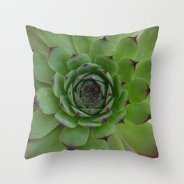 Houseleek (Sempervivum) Photo with purple tips viewed from the top dow Throw Pillow