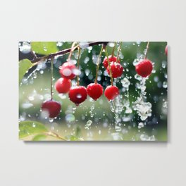 Cherries in the summer rain Metal Print