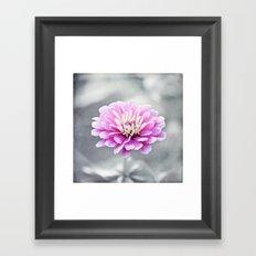 Pink Grey Flower Photography, Zinnia Floral Gray Nature Flowers Framed Art Print