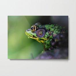 Pensive Frog Metal Print