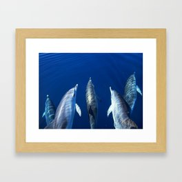 Playful and friendly dolphins Framed Art Print