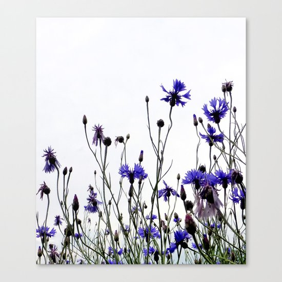 Cornflowers blue Canvas Print