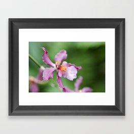 Orchid Beauty (2) Framed Art Print