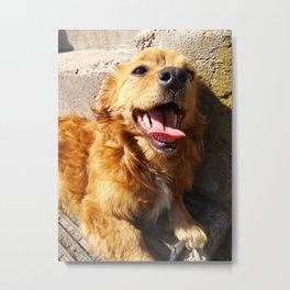 Smiling Puppy Metal Print