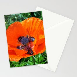 Wild Red Poppy Photograph Stationery Cards