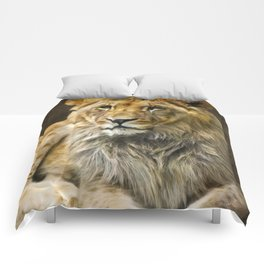 The young lion Comforters