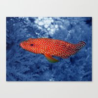 trout Canvas Prints featuring Coral Trout by Serenity Photography