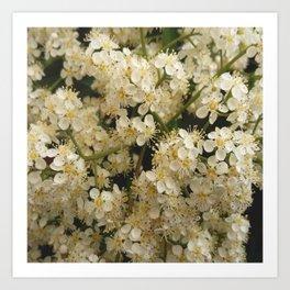 flower and light - White flower 4 Art Print