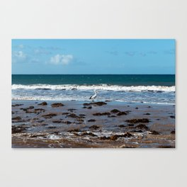 Pelican Standing in Encounter Bay Canvas Print