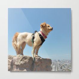 Wonder Dog in San Francisco Metal Print