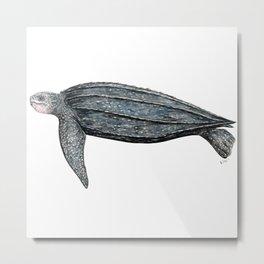 Leatherback turtle (Dermochelys coriacea) Metal Print