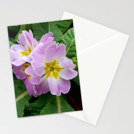 Purple primula at the park Stationery Cards