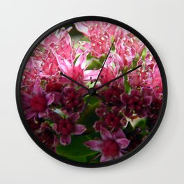 Sedum Flowers and the Ant Wall Clock