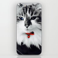 kiki iPhone & iPod Skins featuring Mr. Kiki by  Naartjie Photography