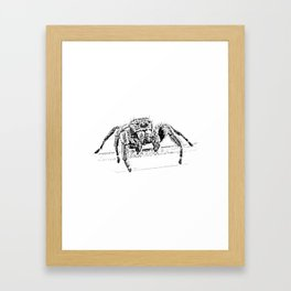 Steve (Jumping Spider) Framed Art Print