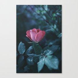 Petal Pink Canvas Print
