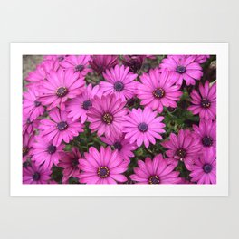 A Crowd Of Pink Purple Daisies Art Print
