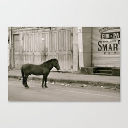 I dream that I saw a horse alone on the streets of India Canvas Print